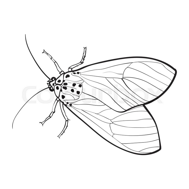 800x800 Top View Of Gray Moth, Sketch Illustration Isolated On White