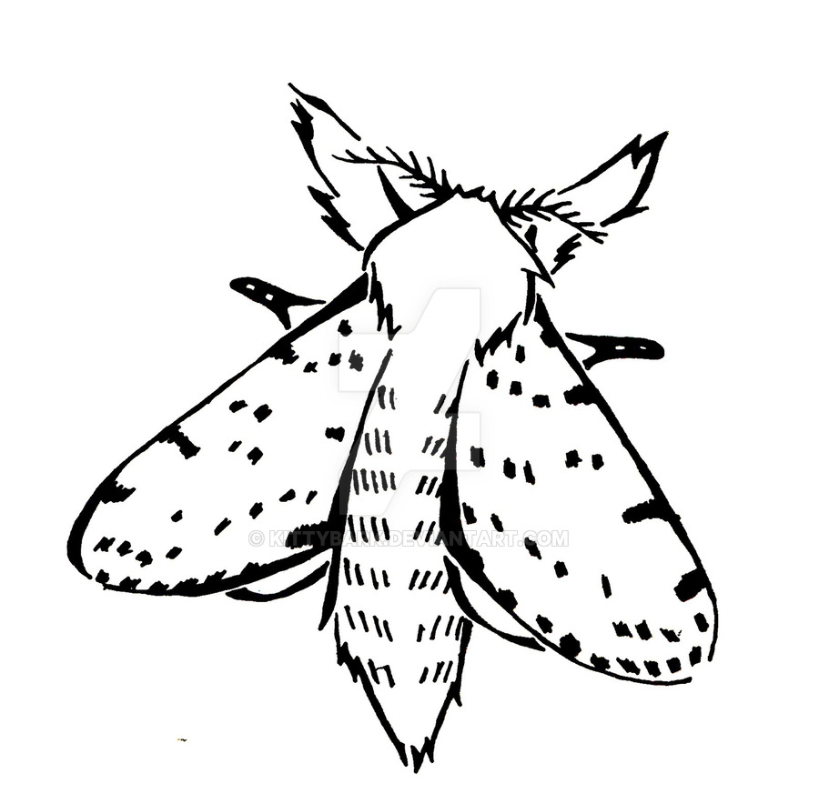 900x884 Dotted Lined White Moth Sketch By Kittybark