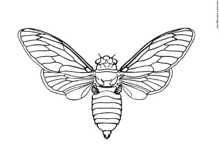 Moth Line Drawing