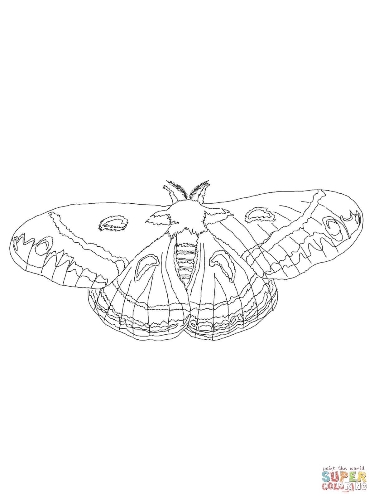 1200x1600 Cecropia Moth Coloring Page Free Printable Coloring Pages