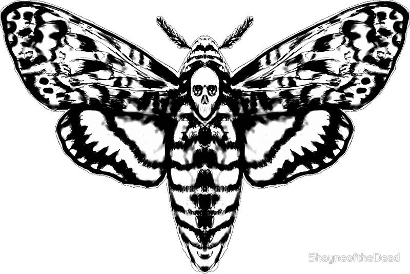 800x534 Death's Head Moth Stickers By Shayneofthedead Redbubble