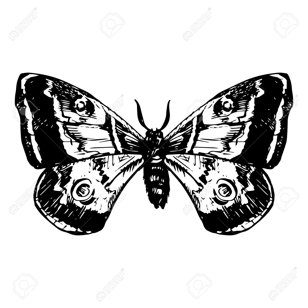 1300x1300 Hand Drawn Butterfly, Line Drawing Vector Element Royalty Free