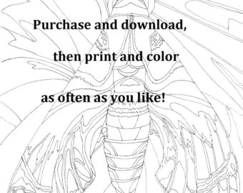 340x270 Line Drawing Moth Etsy