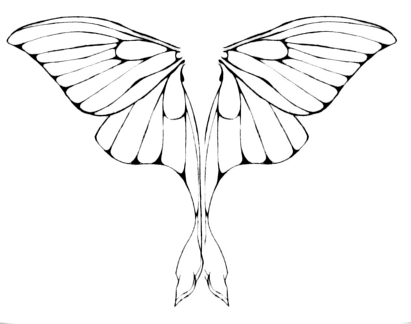 Moth Line Drawing at GetDrawings.com | Free for personal use Moth ...