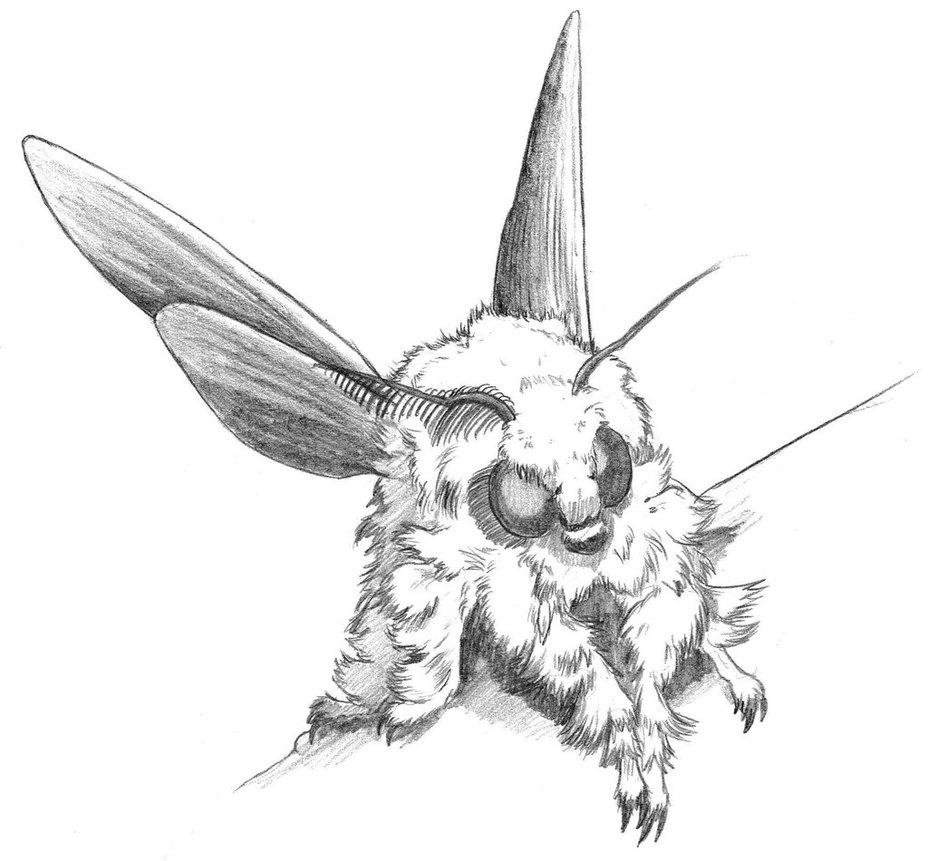 928x861 Yeti Moth By Asanbonsam