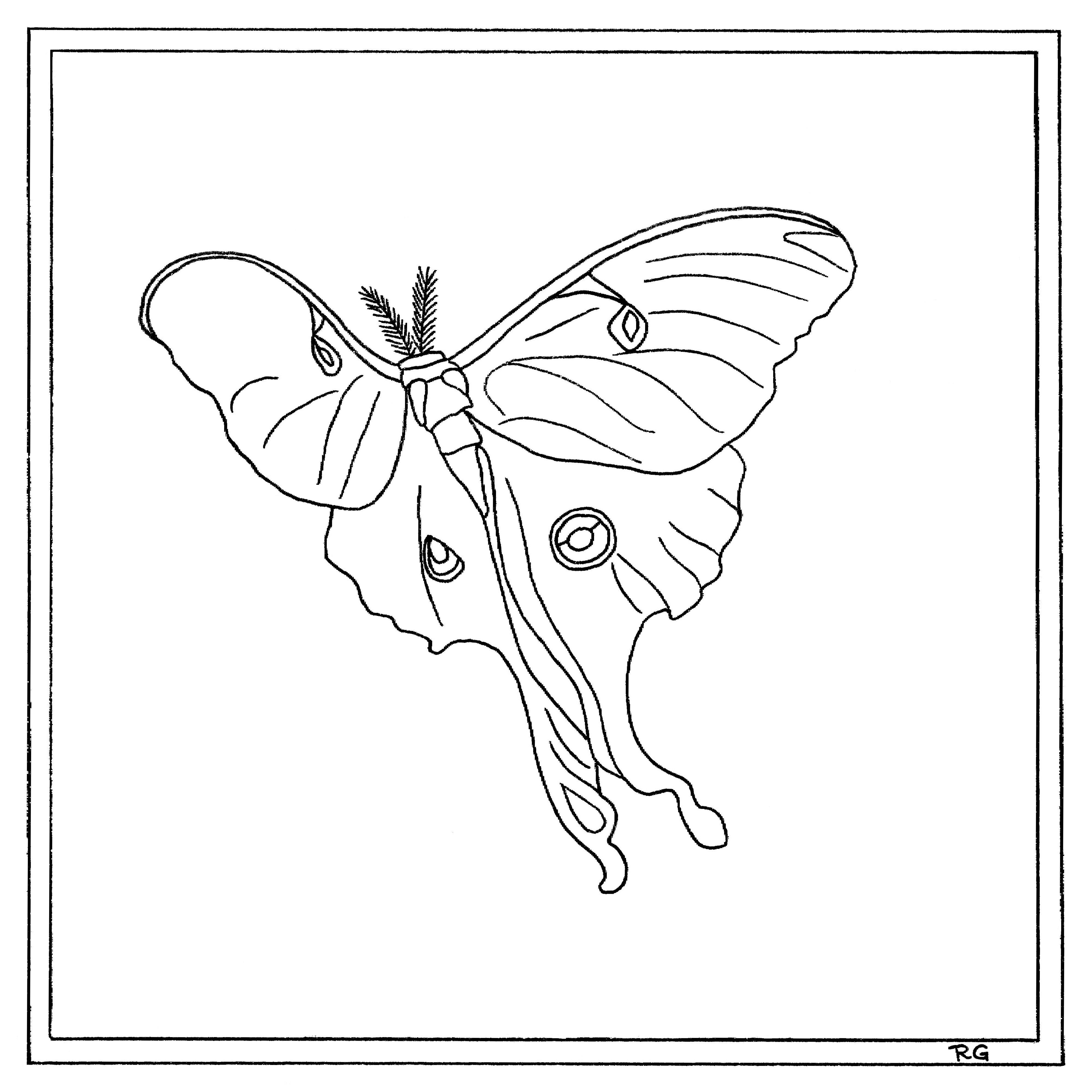 4000x4000 Luna Moth Delphina Rose