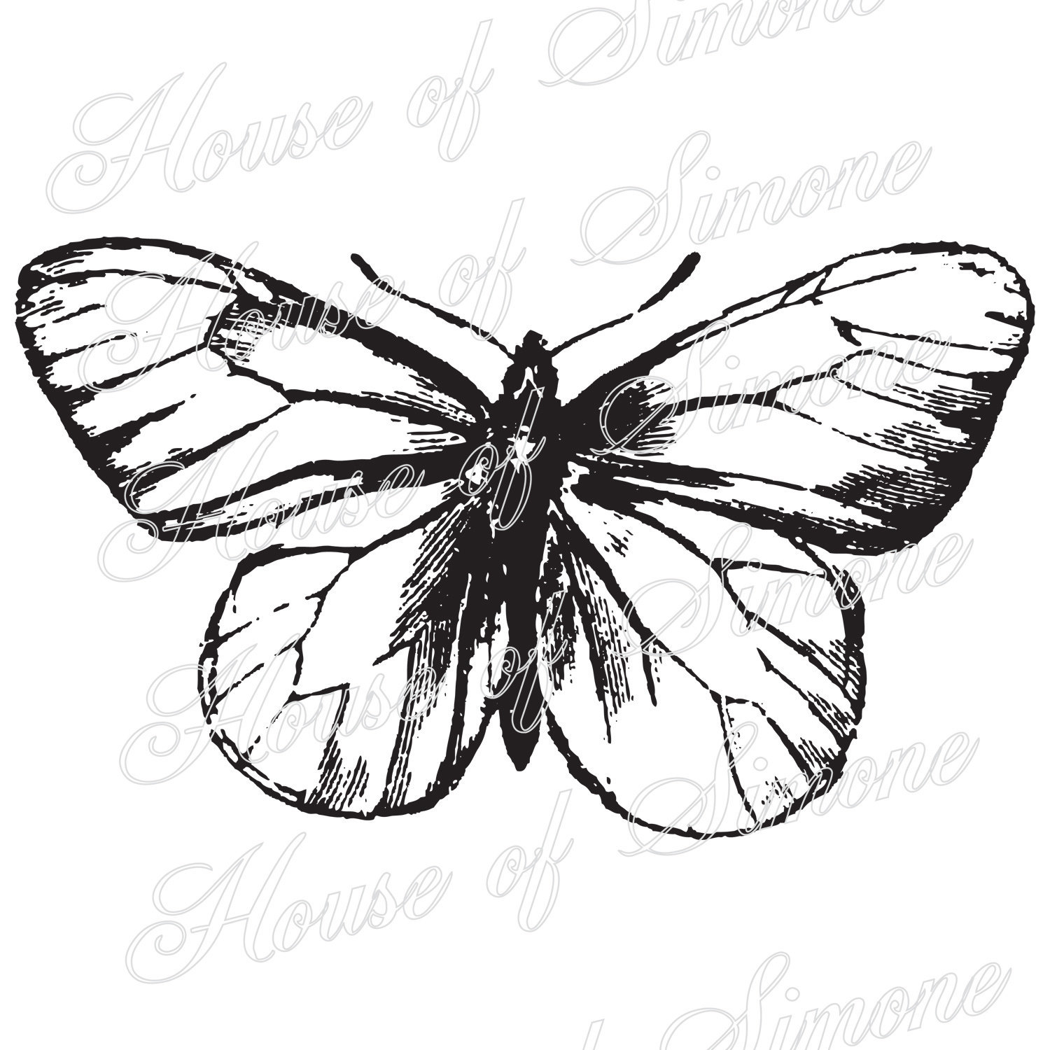 1500x1500 Butterfly Moth Insect Wings Vintage Download Graphic Image Art