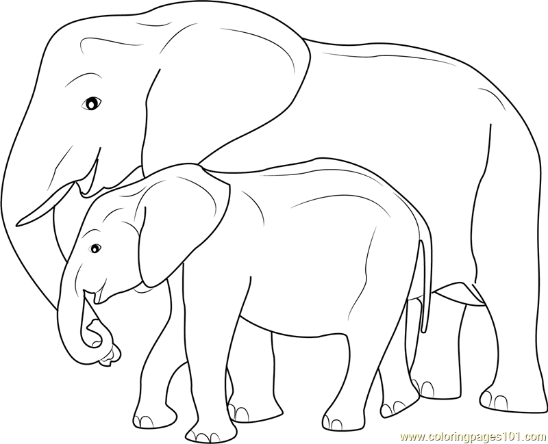 800x649 Mother And Baby Elephant Coloring Page