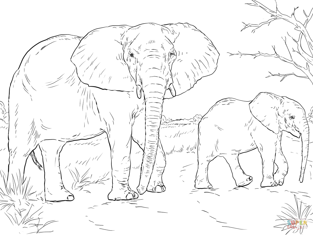 1199x899 African Elephant Mother And Baby Coloring Page Free Printable