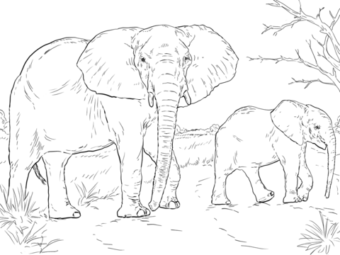 480x360 African Elephant Mother And Baby Coloring Page Free Printable