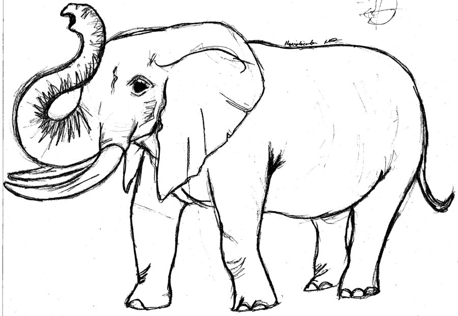 900x621 Elephant Images Drawings