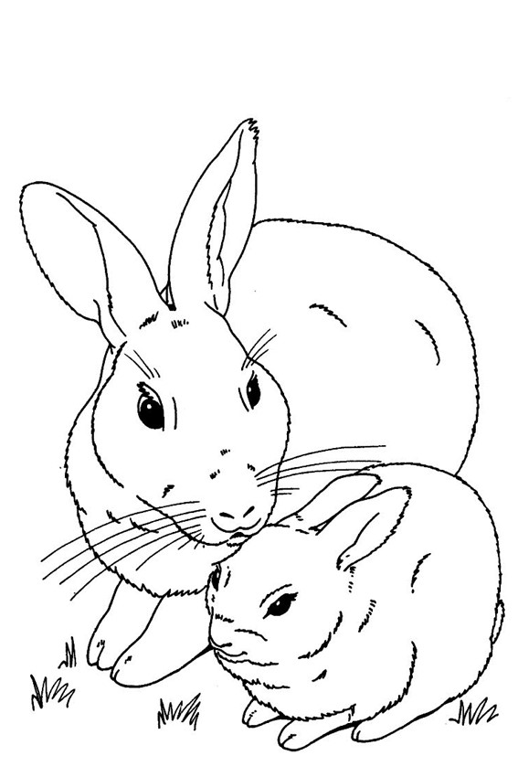 567x850 Color In A Bunny Coloring Page In Stead Of Buying Some Pets