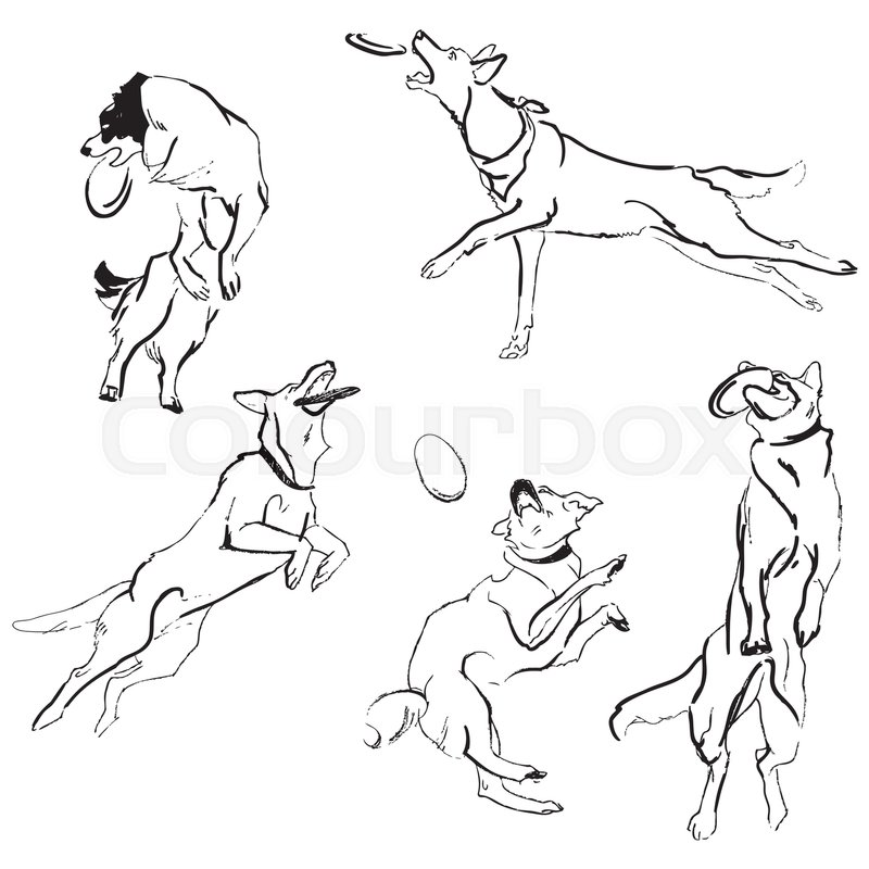 800x800 A Set Of Drawings Of Different Breeds Dogs In Motion. Games