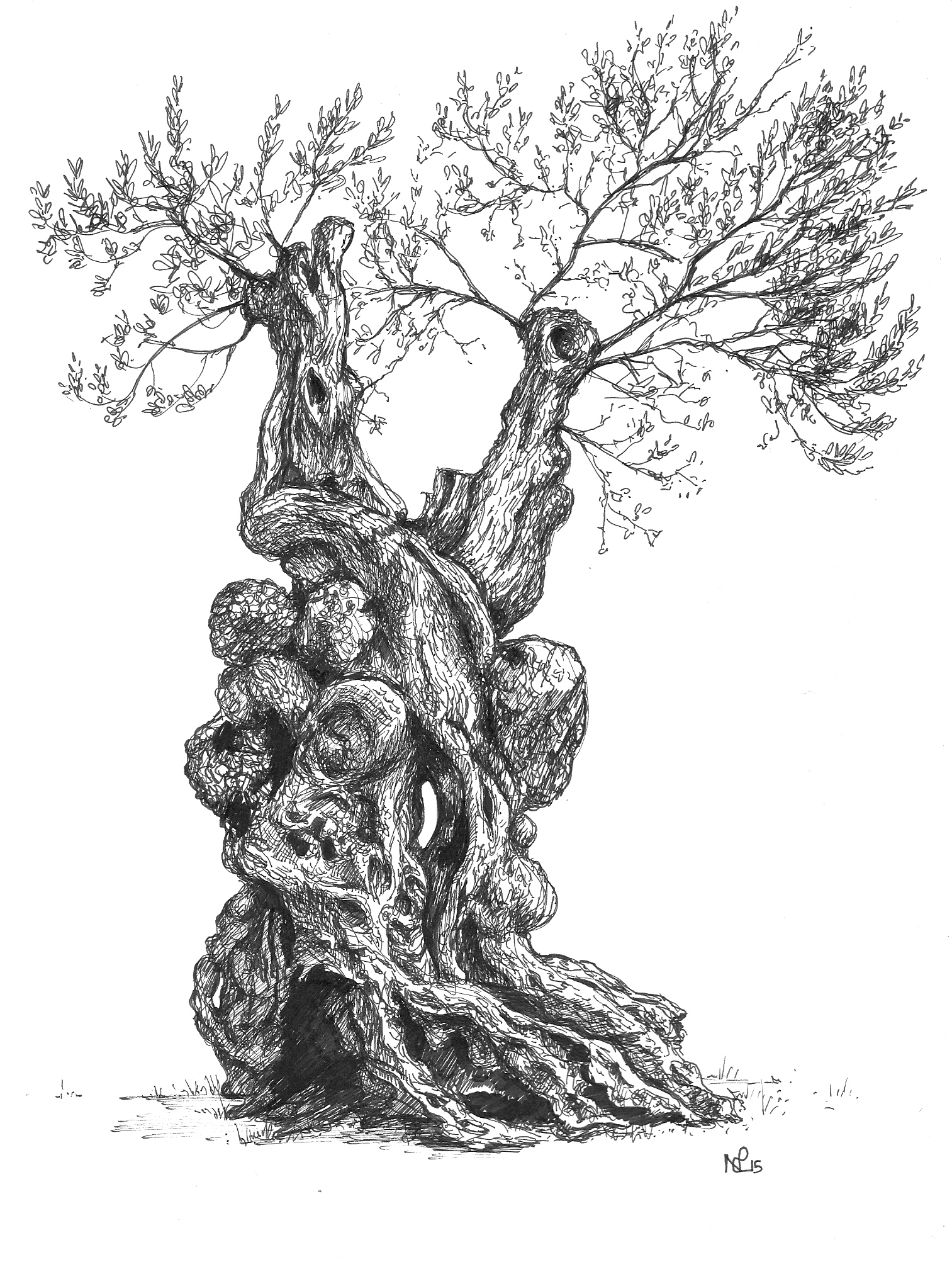 1513x2005 Mallorca Sketchbook Orient Olive Tree The Daily Norm