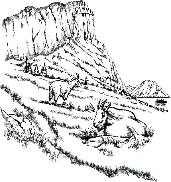 600x640 Mountain Coloring Pages Two Mountain Goat Relaxing Coloring Pages