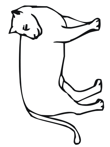 360x480 Mountain Lion Looks Back Coloring Page Free Printable Coloring Pages