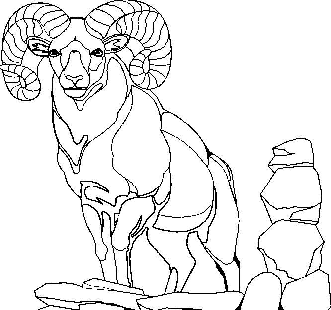666x625 Mountain Goat Coloring Pages Fish Pictures Kids Book