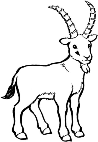 332x480 Wild Goat Coloring Page Free Printable Coloring Pages