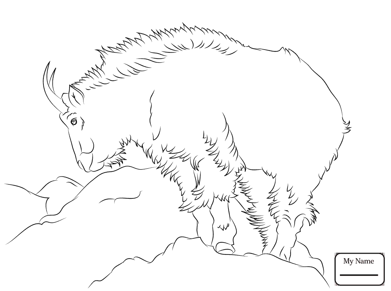 1253x934 Coloring Pages Mammals Hairy Mountain Goat