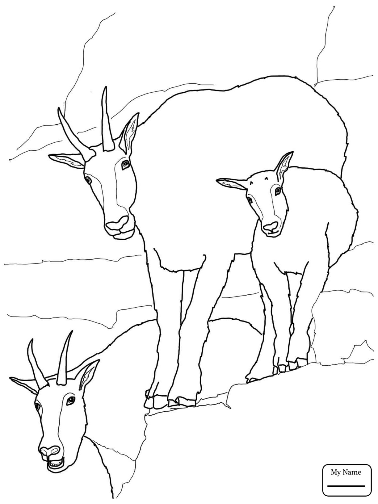 1224x1632 Mountain Goat Mountain Goat Baby With Family Mammals Coloring