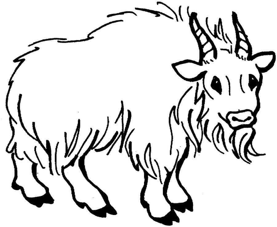 900x737 Coloring Pages Mountain Goat, Printable For Kids Amp Adults, Free
