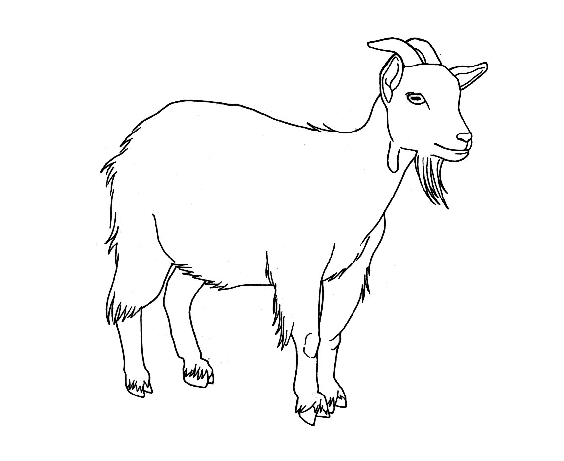 1136x929 Drawing Of A Goat How To Draw A Mountain Goat