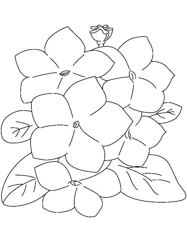 612x792 Laurel Cute Flower Coloring Page Download Free Laurel Cute