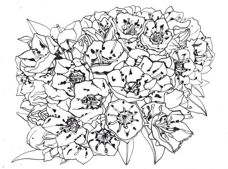 735x546 Mountain Laurel Flower Original Paintings, Draw And Paintings