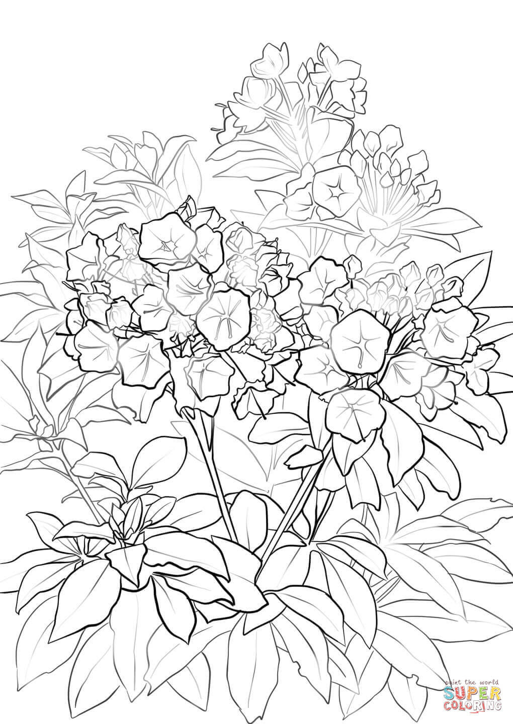 1020x1440 Mountain Laurel Coloring Page Free Printable Coloring Pages