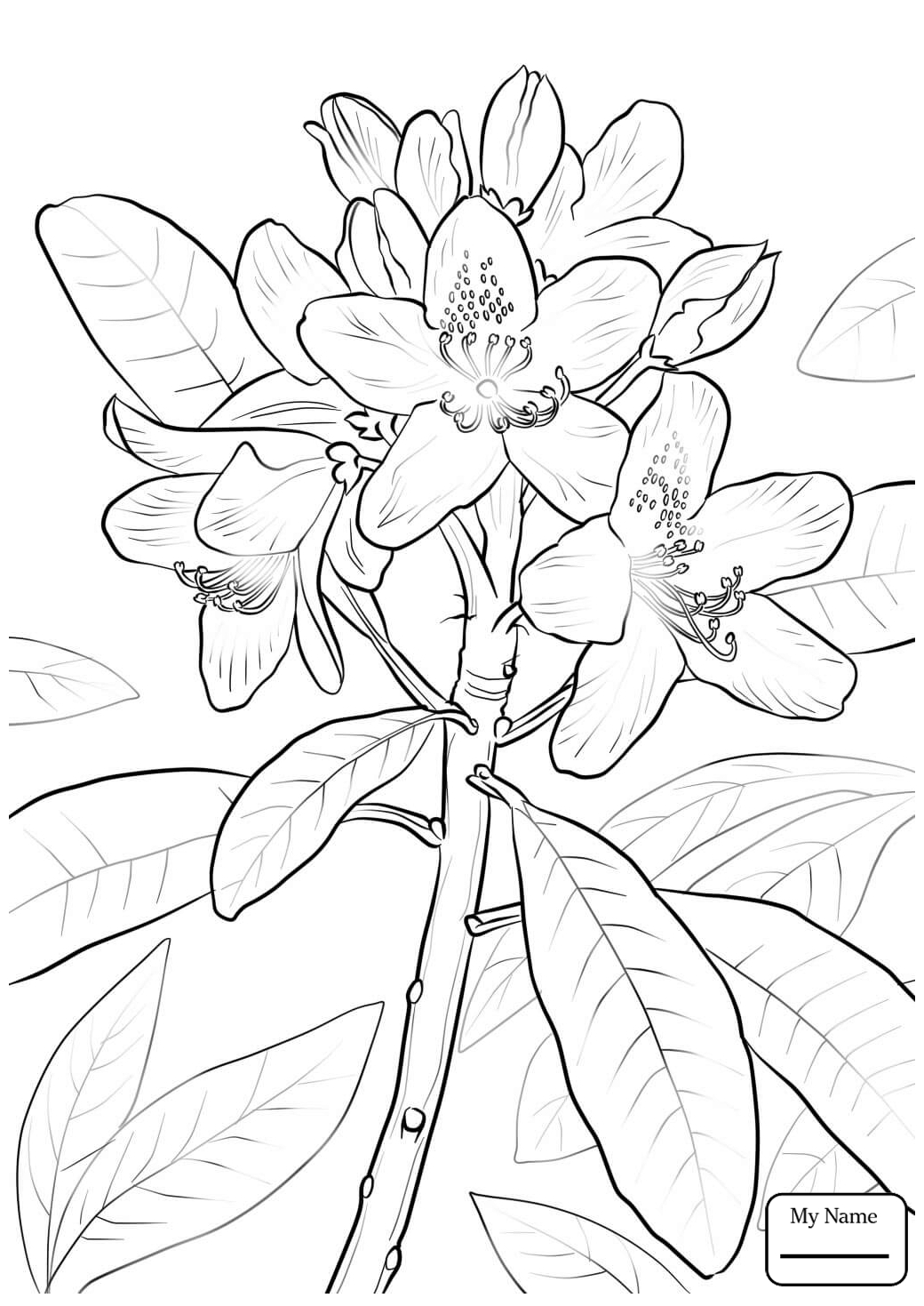 1040x1469 Coloring Pages For Kids Flowers American Robin And Mountain Laurel