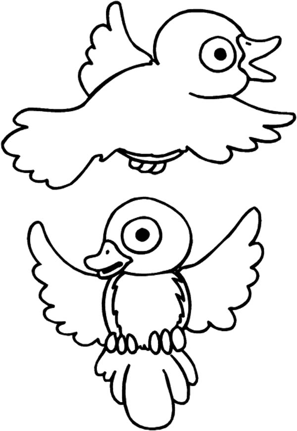 600x870 Drawing Robin Bird Coloring Page