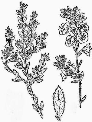 304x400 Future Plants By Randy Stewart Mountain Laurels
