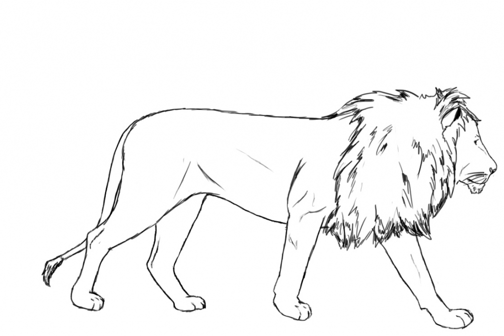 1024x682 Line Drawing Of A Lion How To Draw A Lion Draw Central