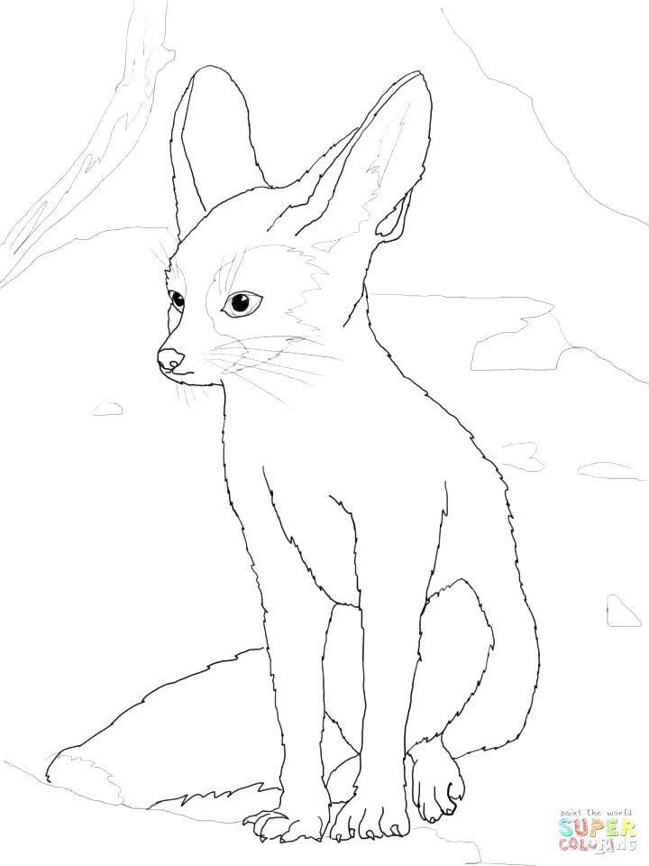 720x960 Puma Animal Coloring Pages Affan