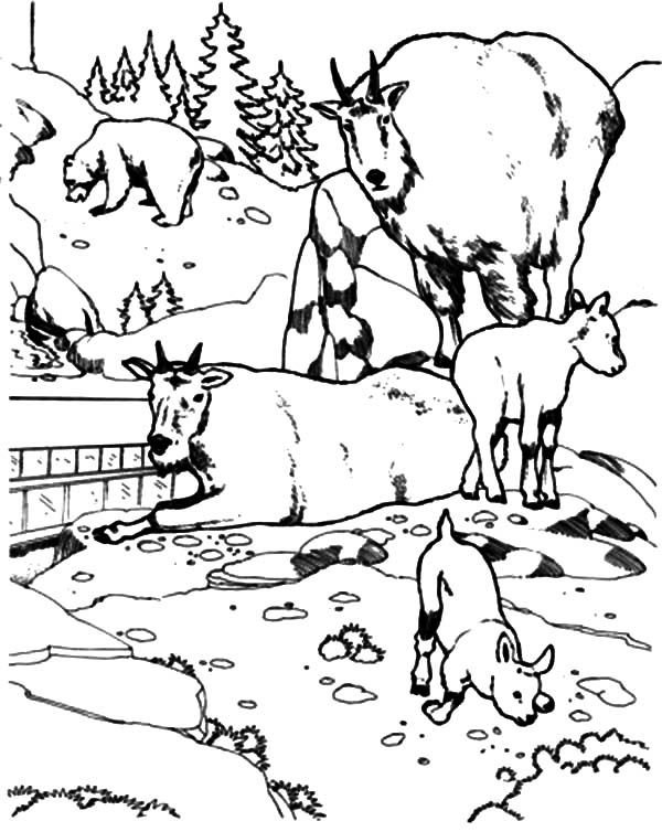 600x754 Mountain Goat Outline Coloring Pages Color Luna