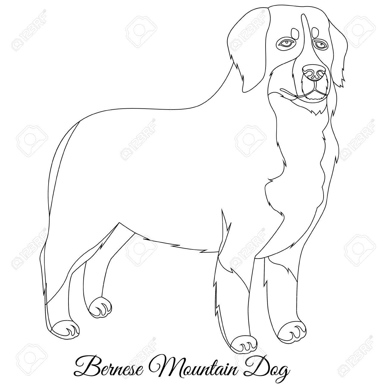 1300x1300 Bernese Mountain Dog Outline Vector Illustration Royalty Free