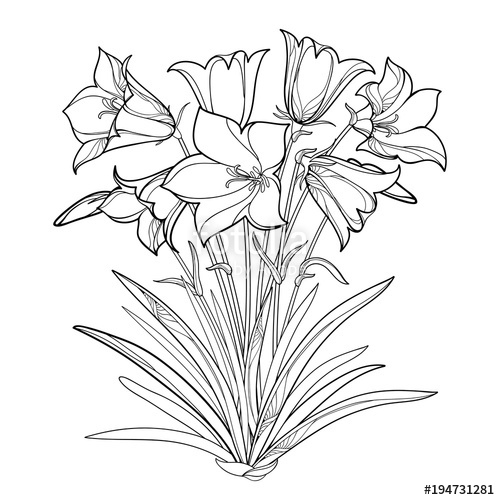 500x500 Vector Bouquet With Outline Alpine Campanula Flower Or Bellflower