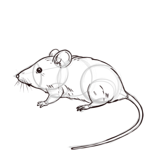 Mouse Animal Drawing