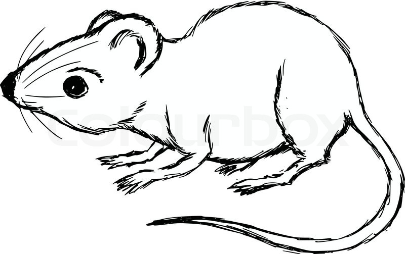 800x503 Hand Drawn, Cartoon, Sketch Illustration Of House Mouse Stock