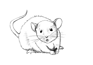 320x222 How To Draw A Mouse Mice, Paper Drawing And Draw