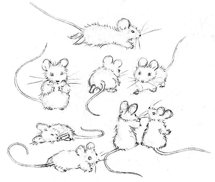 710x603 How To Draw A Mouse With Realistic Features