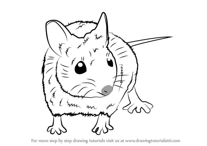 800x565 Learn How To Draw A Wood Mouse (Rodents) Step By Step Drawing