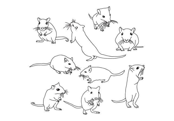 700x490 Mouse Animal Free Vector Art