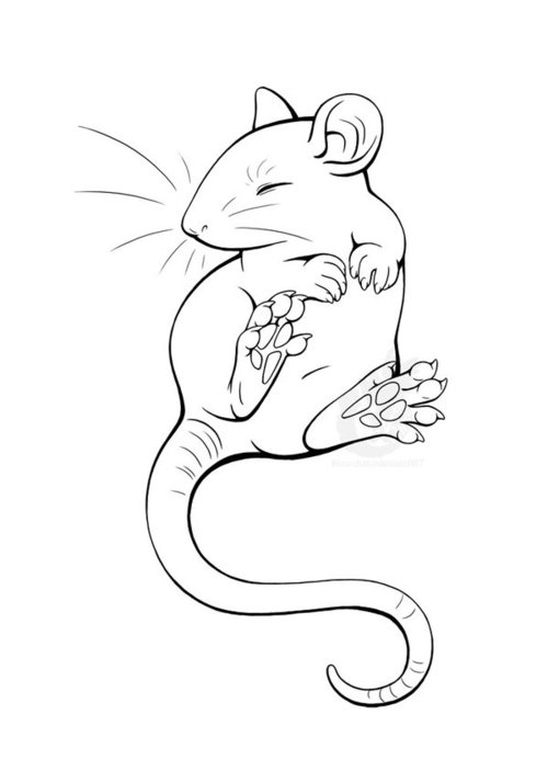 500x703 Doodles Of My Rat On Scrap Paper Done While He Was Sleeping. This