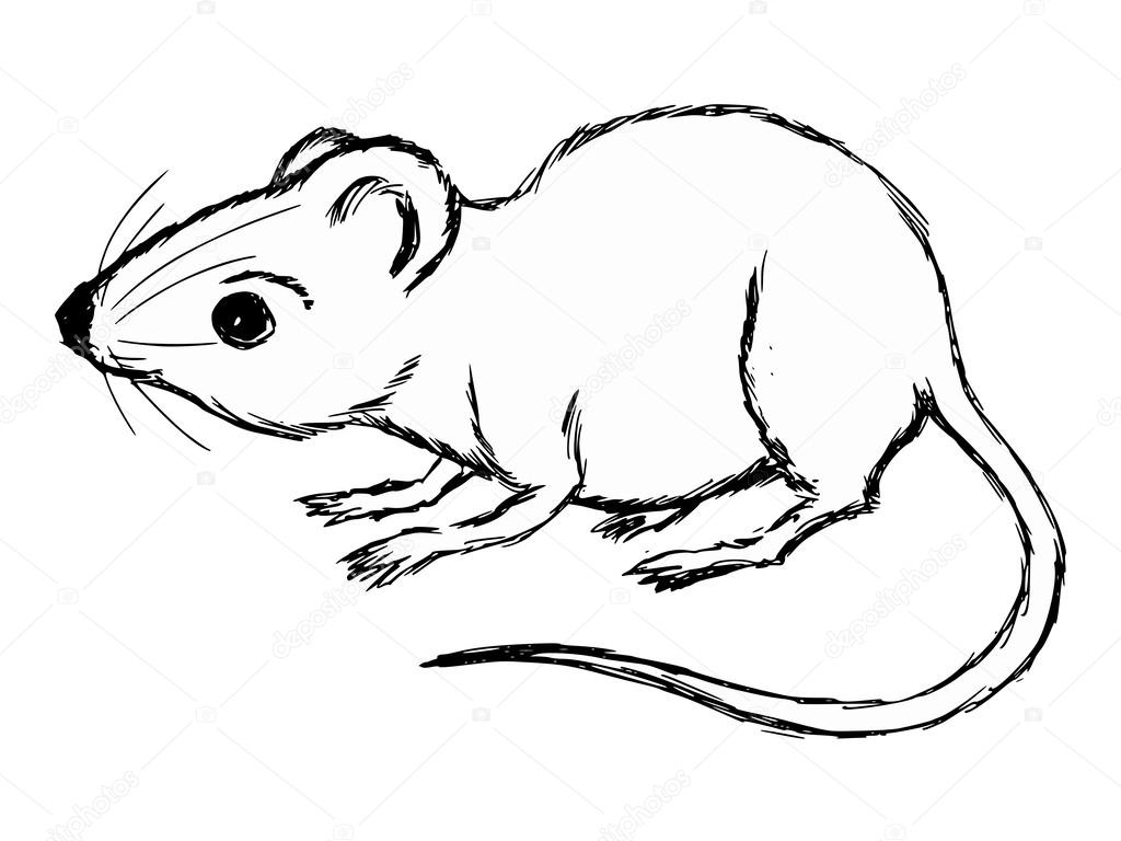 1024x768 House Mouse Stock Vector Perysty