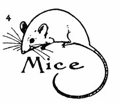 236x203 How To Draw A Mice