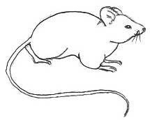 215x172 Drawn Mouse