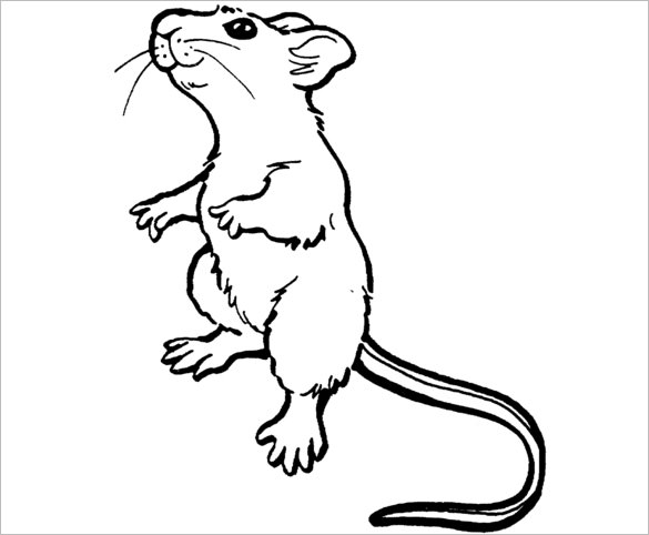 Mouse Outline Drawing