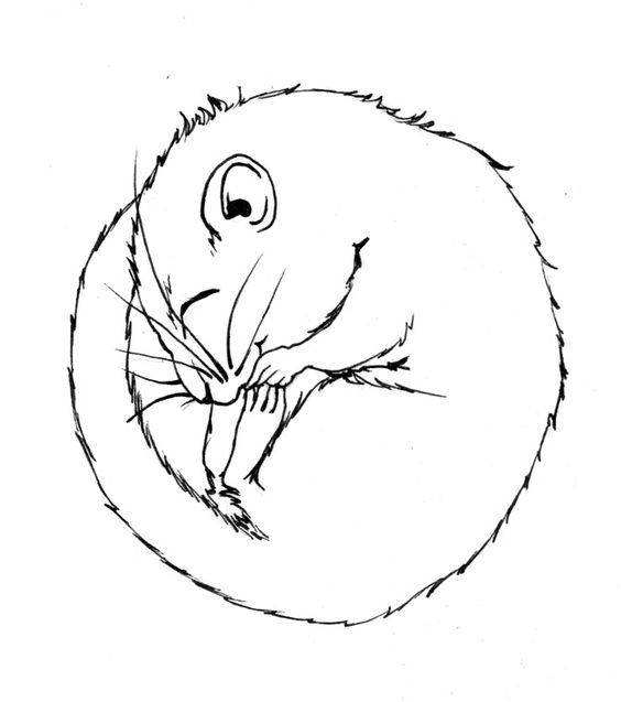 564x637 Pin By Ellen Bounds On Sketches Of Dormice