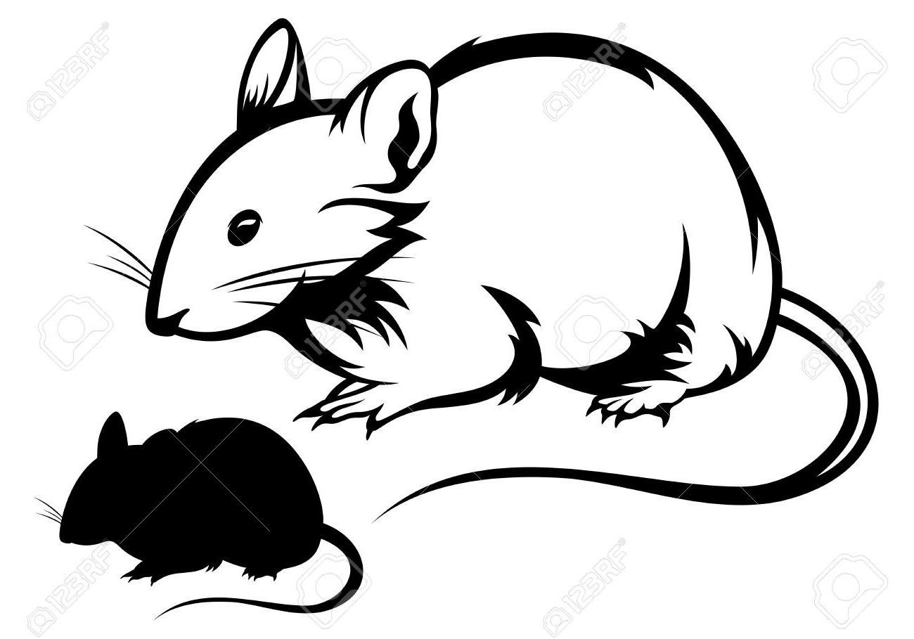 1300x909 Top 10 Mouse Black And White Outline Silhouette Stock Vector Rat